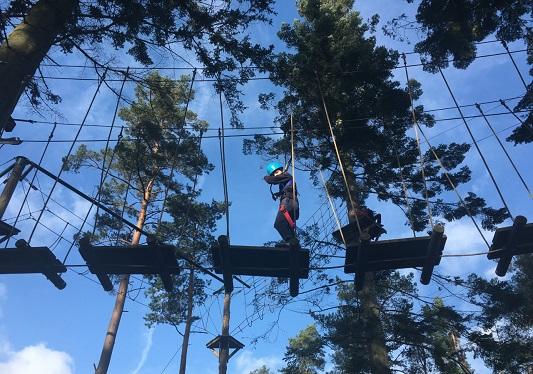 Tree Trekking