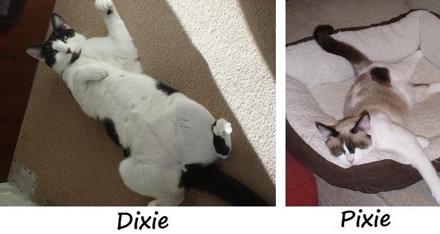 DIXIE and PIXIE