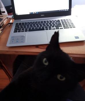 Valerie Keogh cat