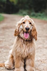 murphy Beth Moran dog