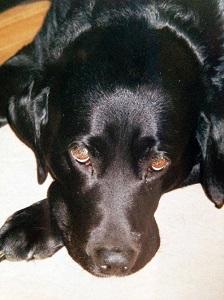 T.A. Williams Dog Merlin