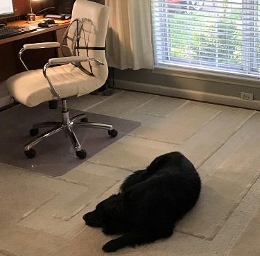 Suman Mallicks Dog