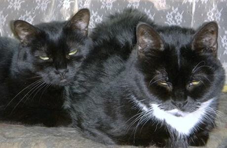 Karen Heenan cats