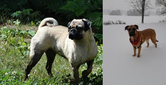 T.S. Beiers Dogs