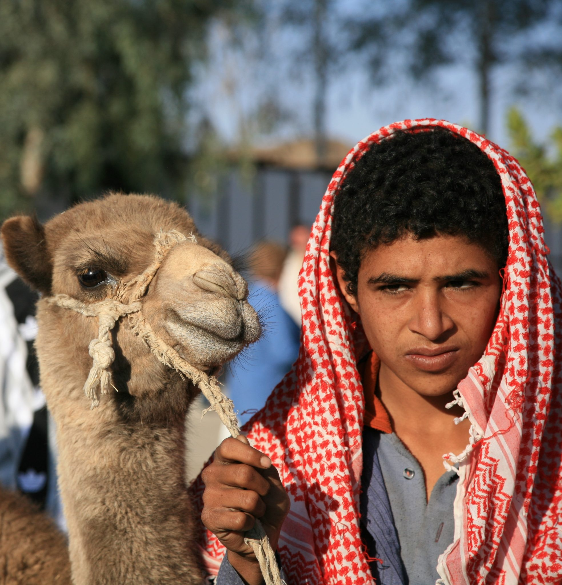 Bedouin with Camel - Ricardo Liberato, Creative Commons