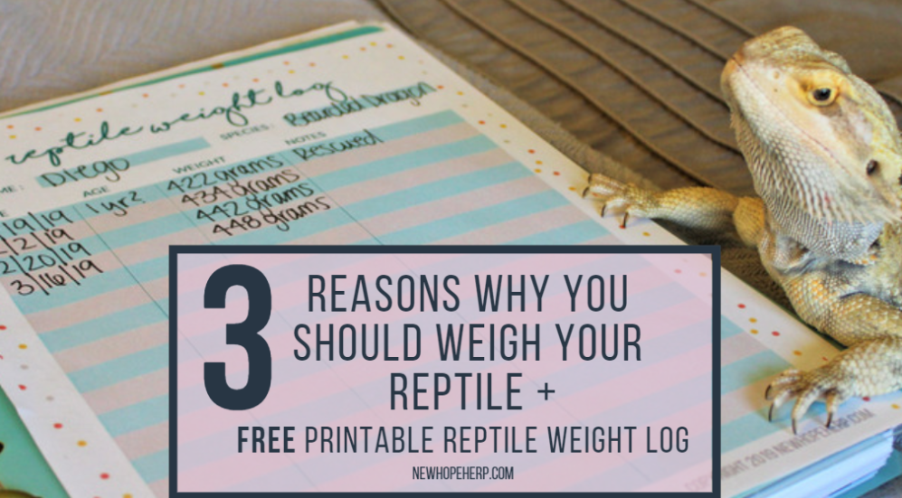 3 Reasons Why You Should Weigh Your Reptile + FREE Printable Reptile Weight Log newhopeherp.com