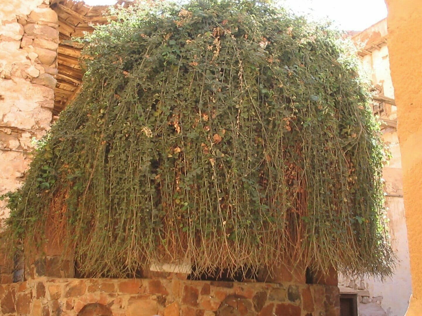 The Burning Bush of Moses in Egypt