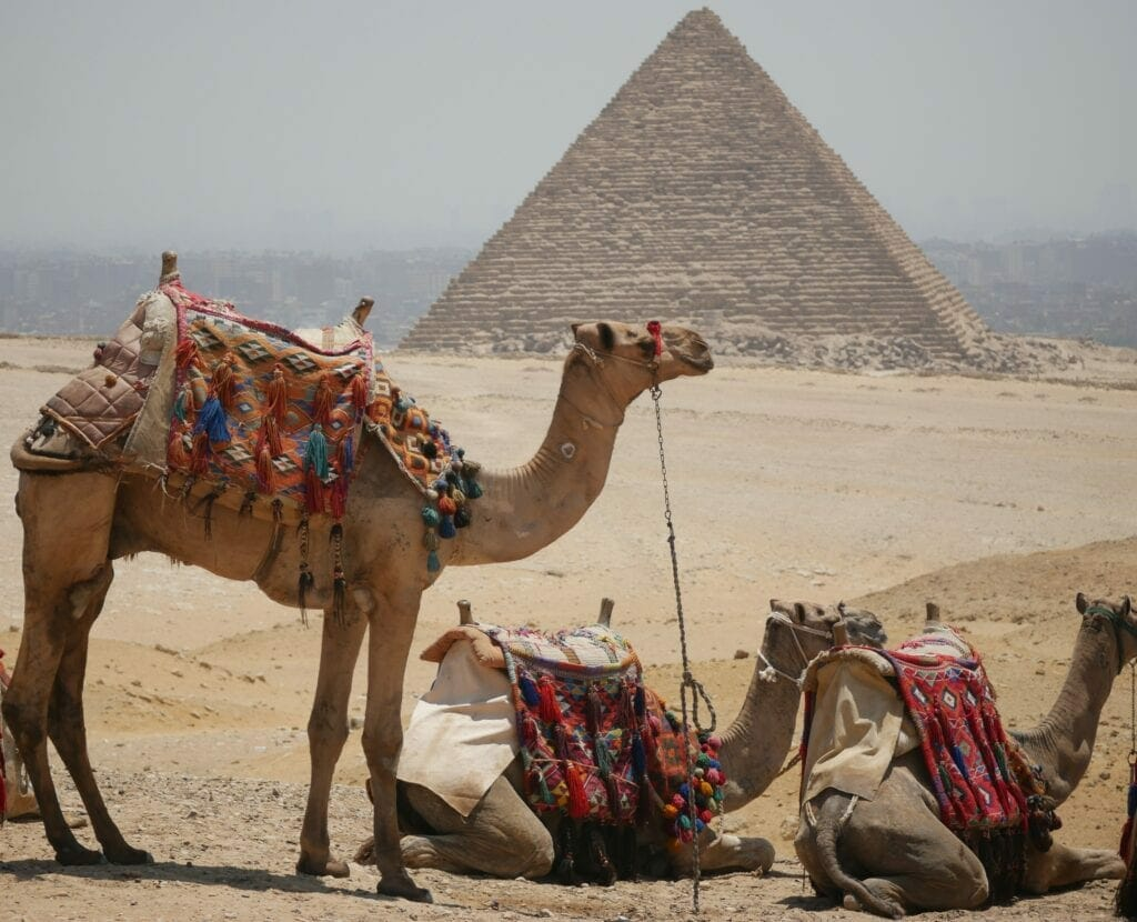Camels at the Pyramids-Egypt Private Tours