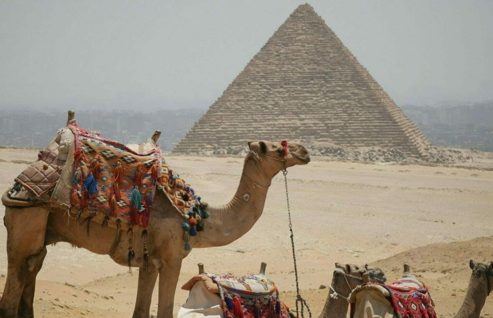 Camels at the pyramids-Egypt Group Tour-Egypt Best Value Group Holiday-Egypt Best Group Adventure-Egypt Tour-Small Group Egypt Tour