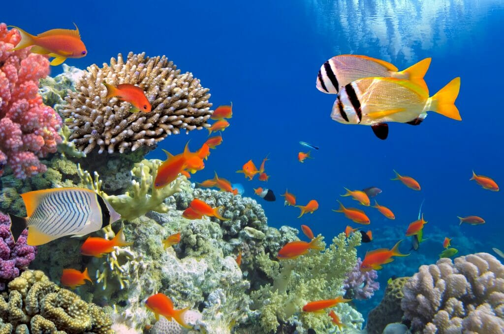 Best Sea Life in the Red Sea