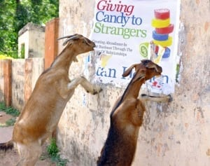 GivingGoats