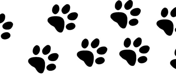 paw_prints_top