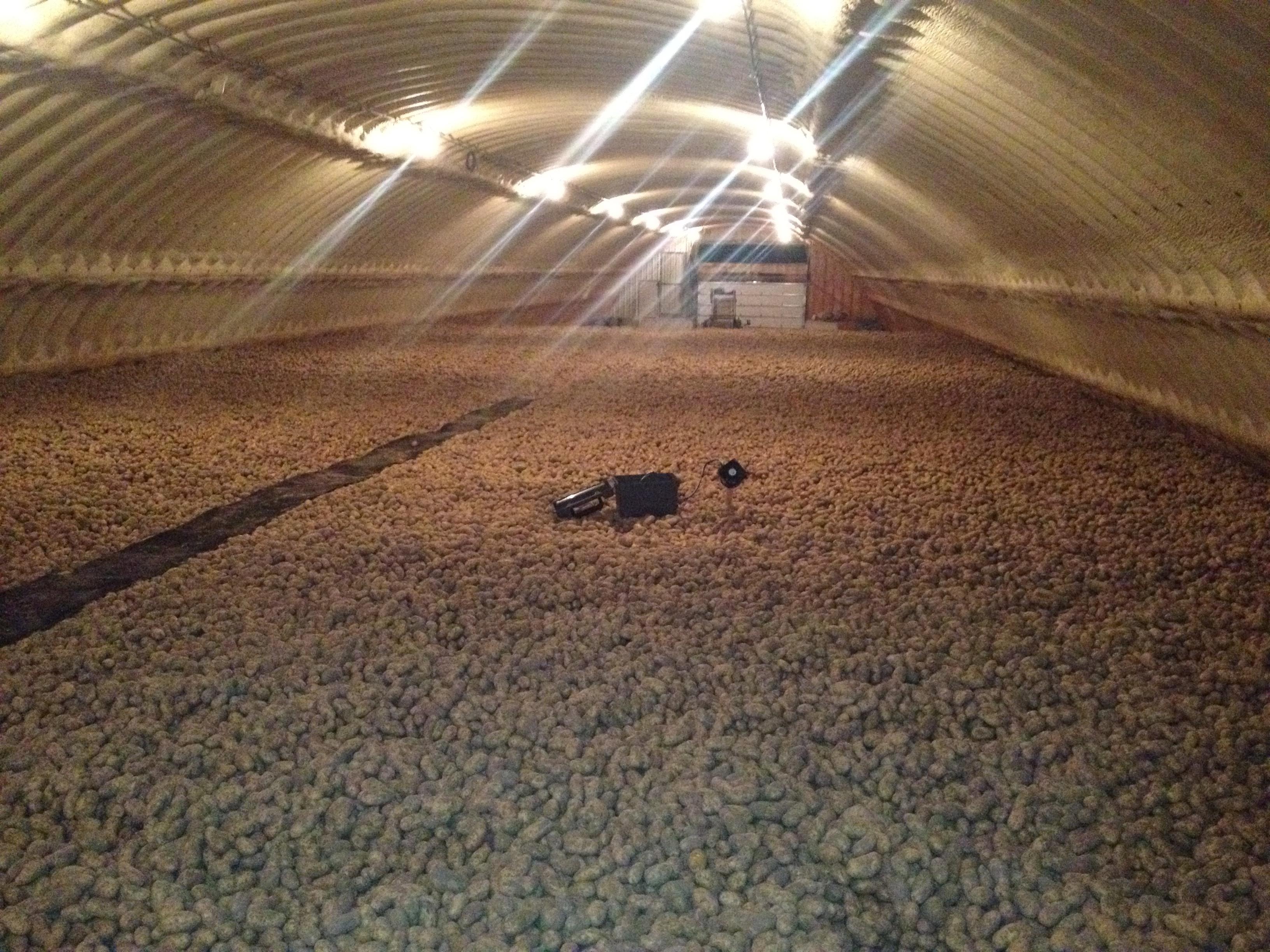 Leveled potato storage
