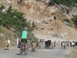 Biking through a herd of goats © 2016 Karen Rubin/goingplacesfarandnear.com