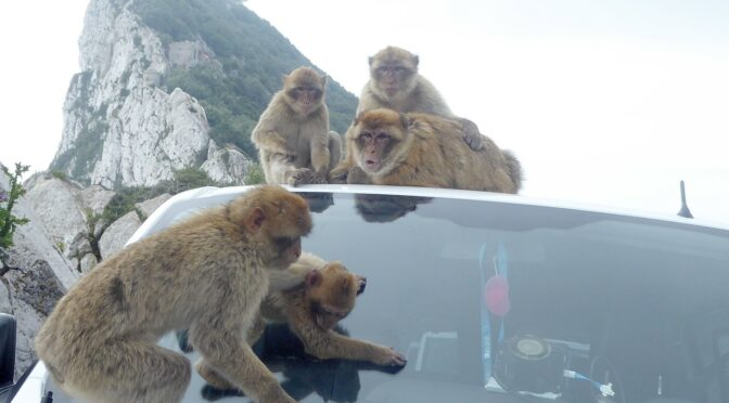 Global Scavenger Hunt: A Dash through Gibraltar Reveals a Modern-Day Brigadoon