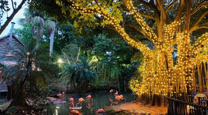Where Holiday Lights Shine Brightest this Season