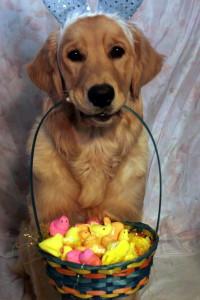 Pet Photo #15 - Beep!