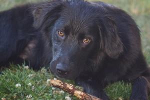 Pet Photo #4 - Dozer
