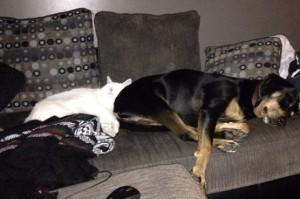 Pet Photo #11 - Prometheus & Piper