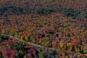 leaf peeping in maine highway