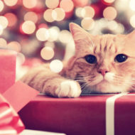 Tips for Holiday Pet Safety from Royal Canin