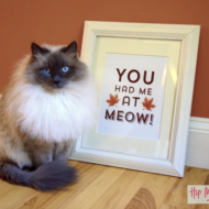"Oscar Approved Purina Muse Cat Food at Petco + Printable Fall ""Meow"" Framed Art"