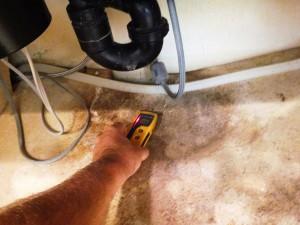 mold testing san diego