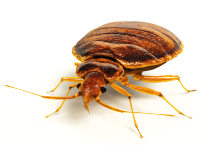Dust Mites Invading Your Home!