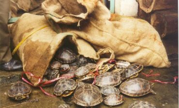 Illegal wildlife trade running on Snapdeal, Quikr, Olx, Ebay, Amazon, says government