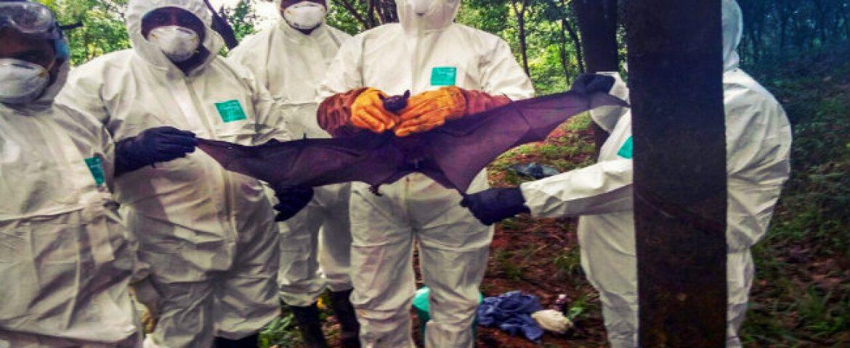 Saudi Arabia bans produce from Kerala fearing Nipah Virus Spread