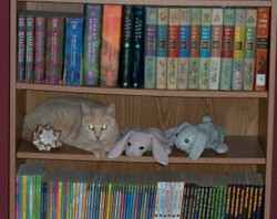 Cat on a bookshelf