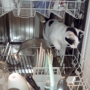 Laura Jones - I feel better when I am having help with the dishes