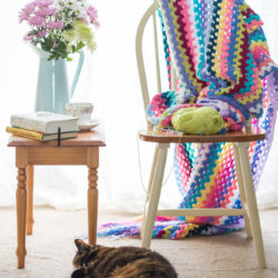 cat and knitting