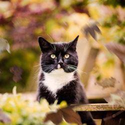 cat in nature