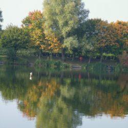 Reflections at Needham Lake