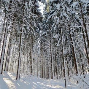 Winter Wonderland by Vanessa Hunt