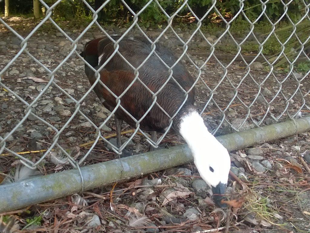 Te Anau Bird Sanctuary