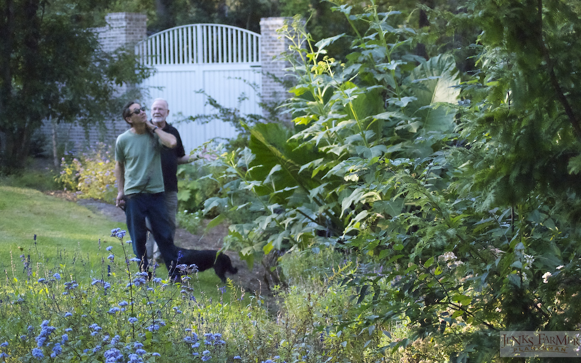 Garden Shared between Three Families