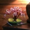 This is ONE flower of Crinum augustum in a bowl for July 4th.