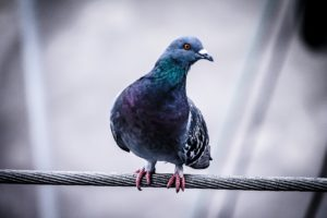 You Can't Have Epiphanies in a Pigeonhole