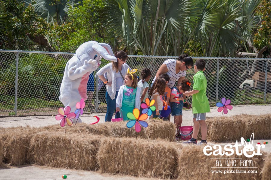 Easter at the Farm, Pinto's Farm