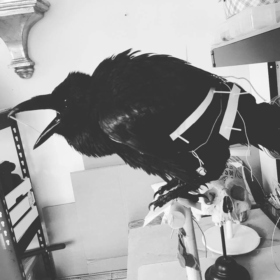 Taxidermy Raven For Sale