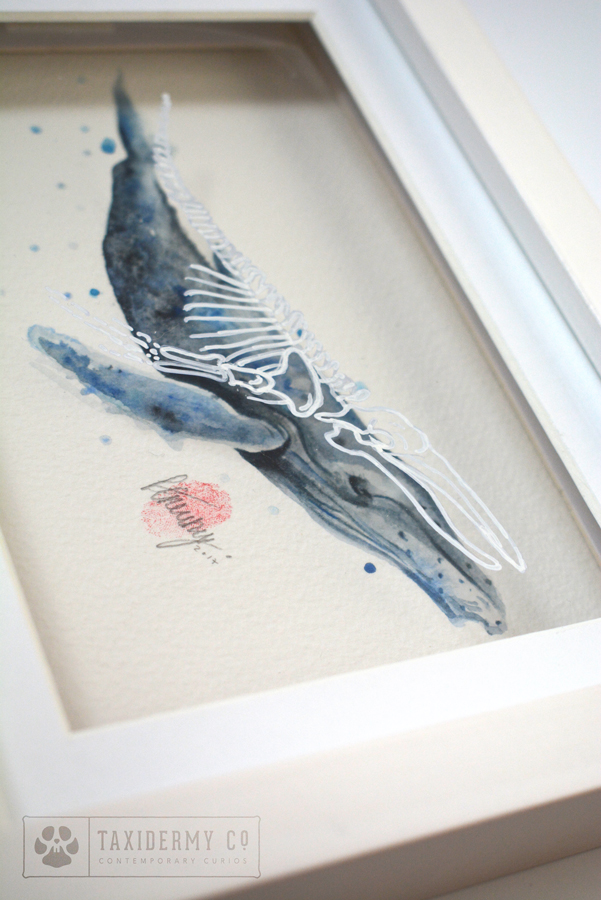 Anatomy-Whale-Painting