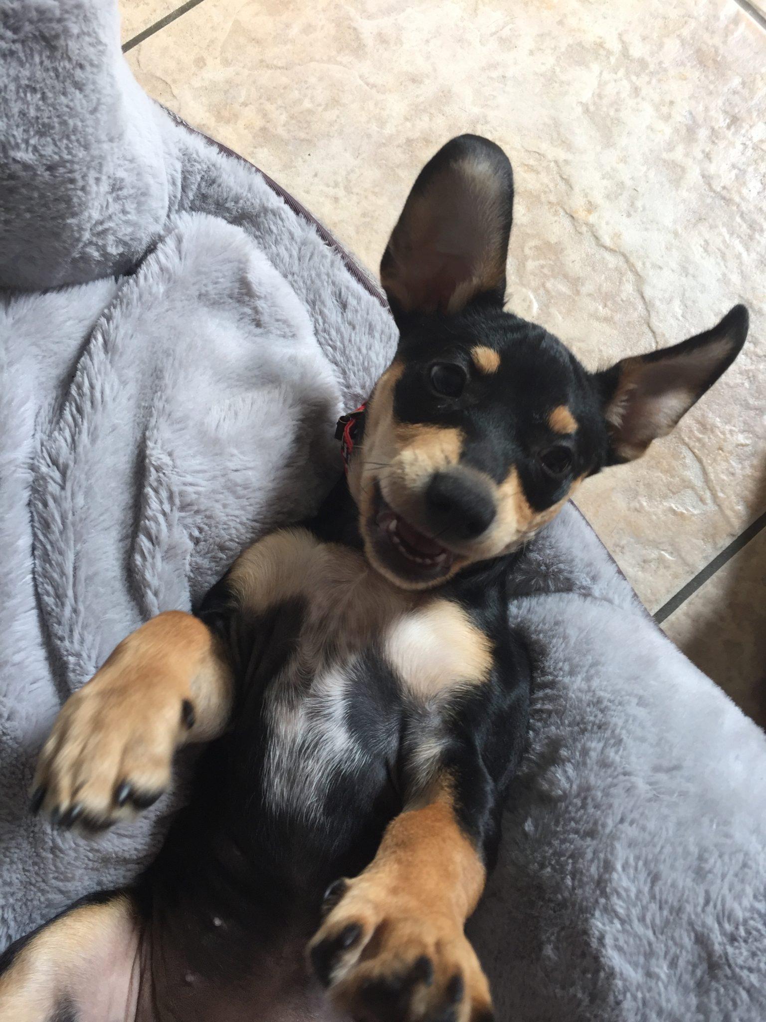 Ruby Puppy