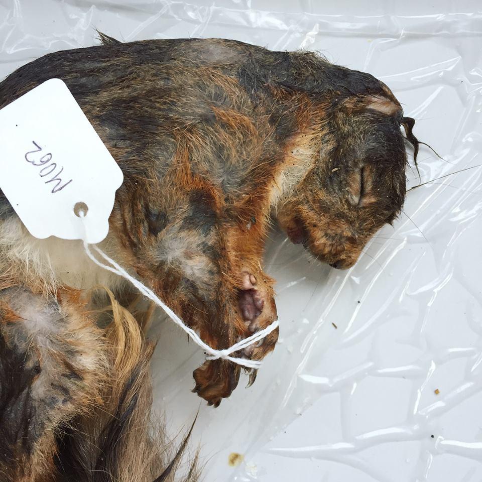 Taxidermy Dead Squirrel