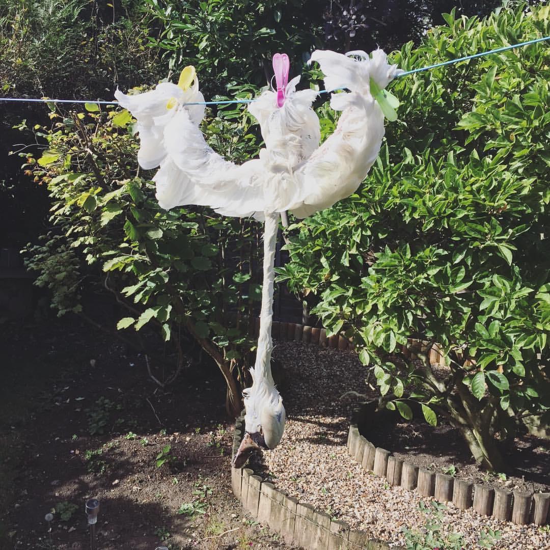 Taxidermy Bird Process