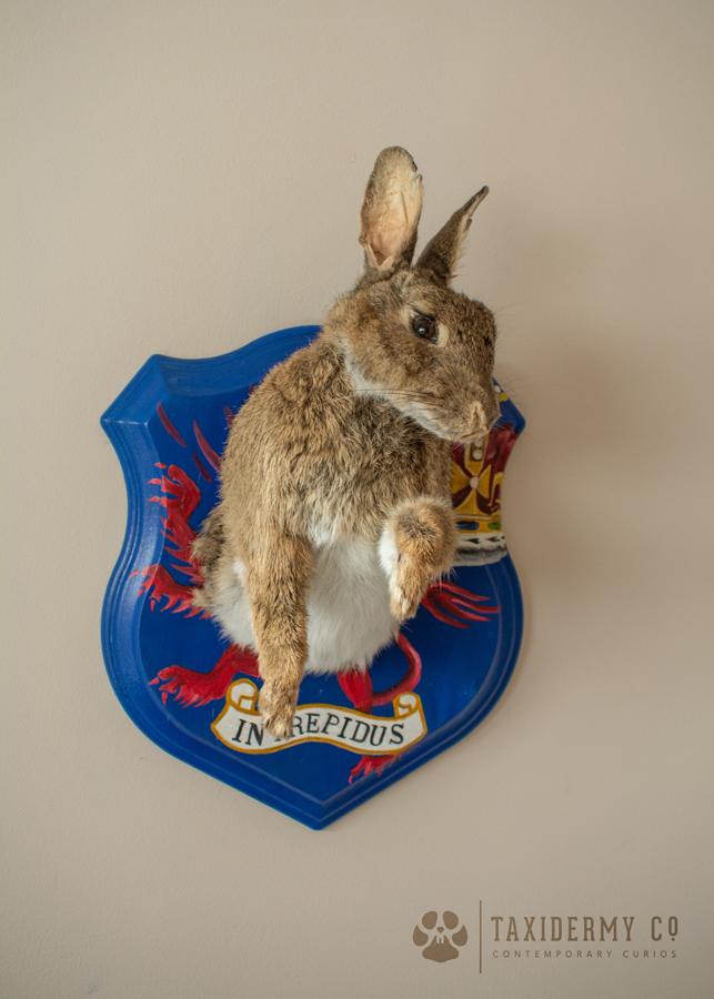 Bespoke Taxidermy Rabbit on Shield