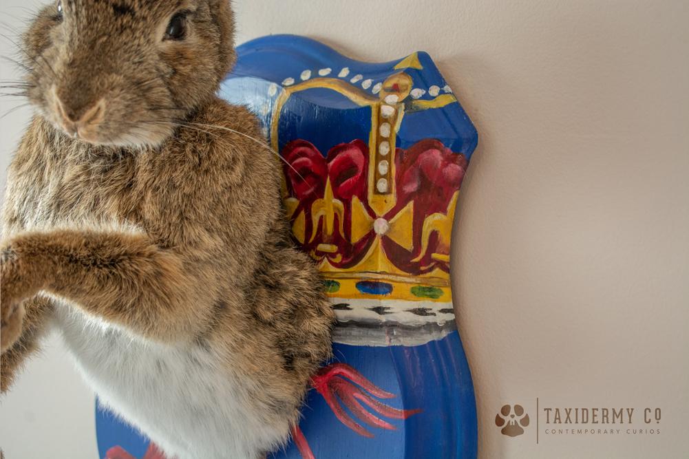 Taxidermy Rabbit on Custom Painted Shield Art
