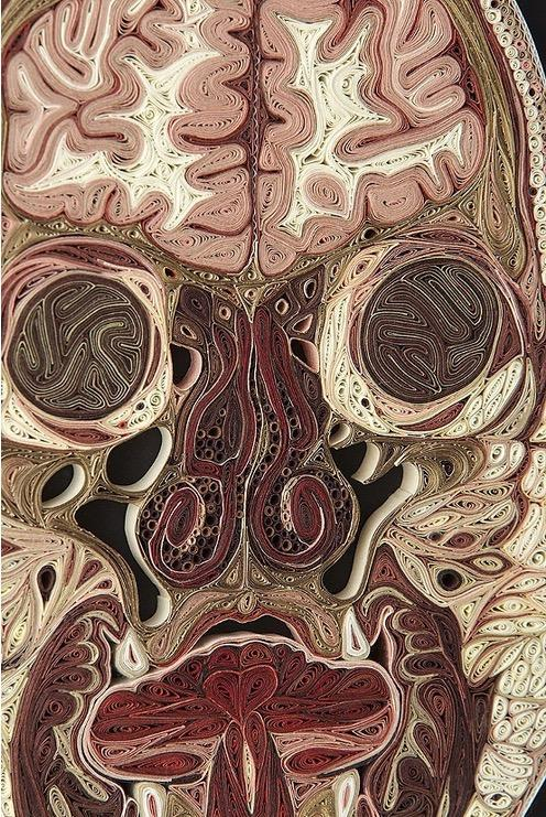 anatomy art