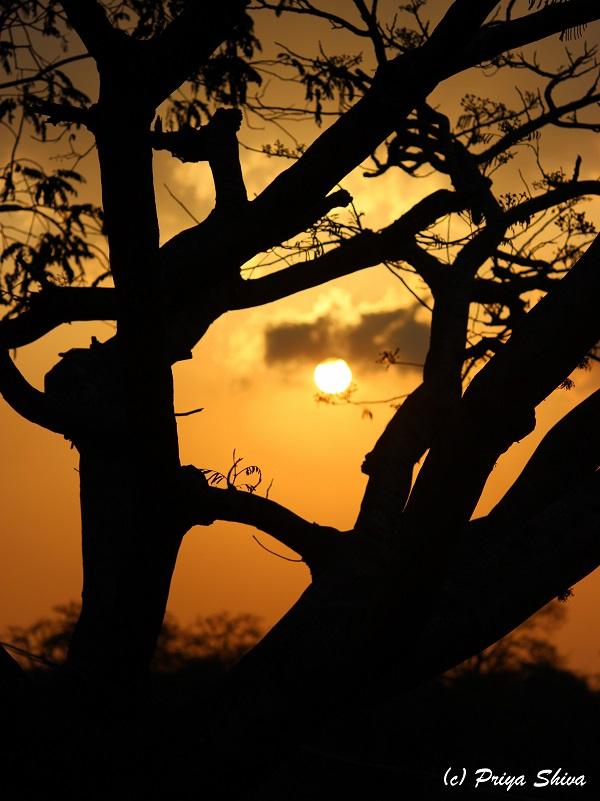 sun set at Masinagudi